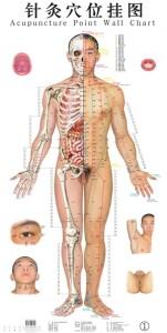 Acupunctuurkaart2